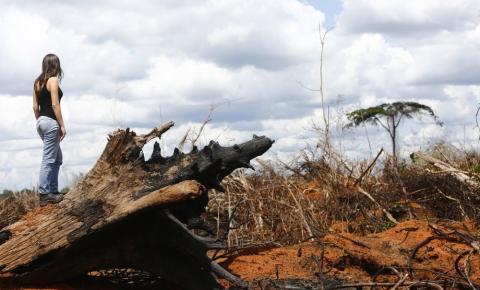 Gestora ambiental do Greenpeace conta como é trabalhar em ONGs: escritório x atuação no campo