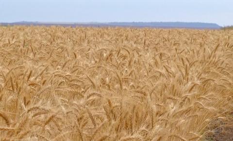 UE importa mais grãos do que exporta pela 1ª vez em mais de 10 anos